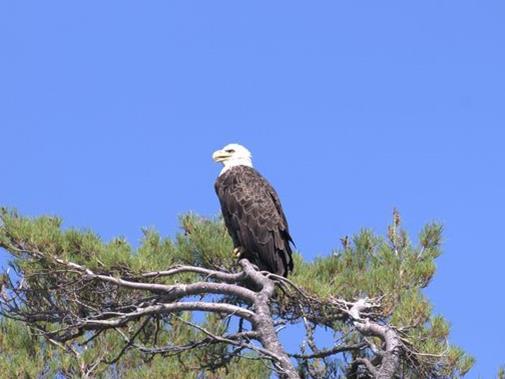 Eagle 1 - Team Photo